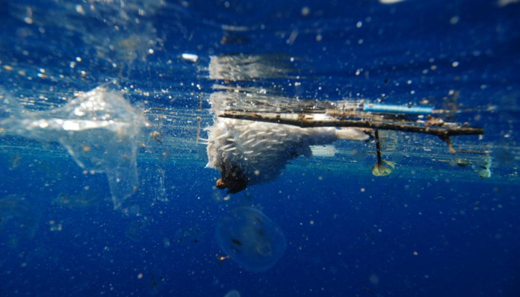 a plastic ocean 1