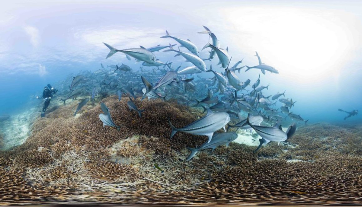 Trevally at Lady Elliot Island - Photo By The Ocean Agency_XLCatlin Seaview Survey_Christophe Bailhache 2