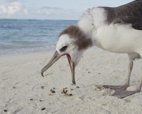 Introducing Albatross