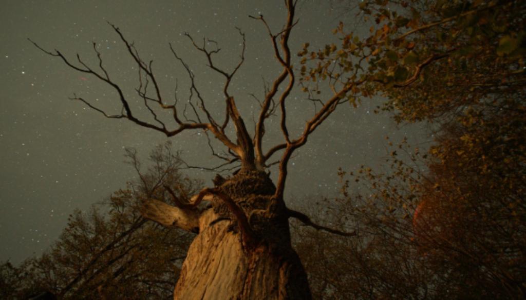 The Hidden Life of Trees ╕ 2019 Constantin Film Verleih GmbH nautilusfilm (13)